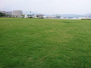 金ヶ崎緑地公園の清掃活動をおこないました。