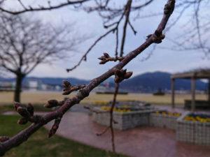 金ヶ崎緑地の朝の月例清掃